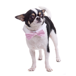 Pink Satin Bow Tie